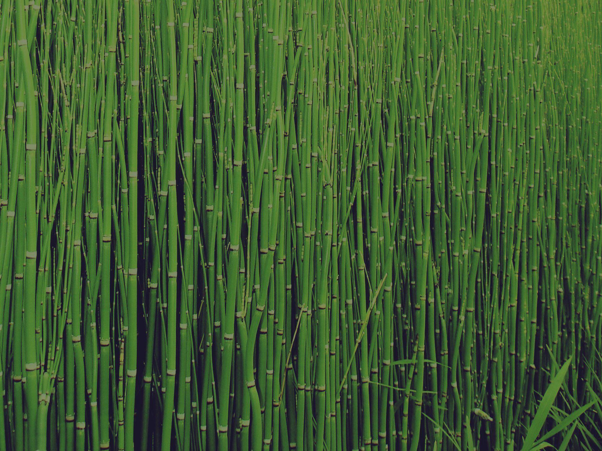 spa-green